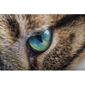 Grattol Magic cat - магические кошки со скидкой 13%